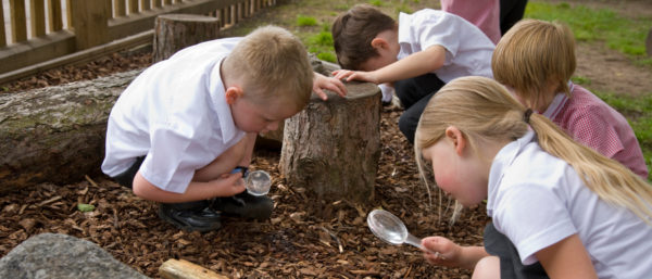 children looking for insects in their school playground