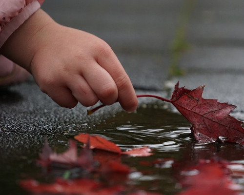 child's hand picking up a leaf from a puddle