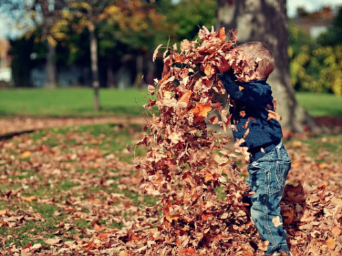 child playing with autumn leaves